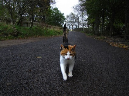 Just to be the cat who walked 1000 miles
