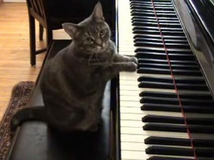 Gato piano