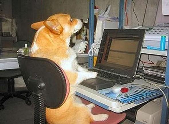 Un can en un ordenador